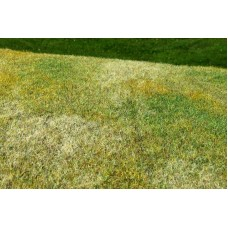 Grass Mat - Cut Meadow (late summer) 29x19cm
